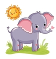 Elephant stands on sunny meadow