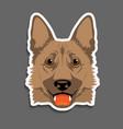 german shepherd dog head portrait vector image