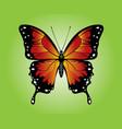 monarch orange white black yellow vector image vector image