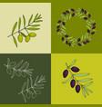 olive olea europaea edible and medicinal plant vector image