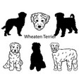 wheaten terrier set collection pedigree dogs vector image vector image