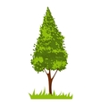 picture with green tree vector image