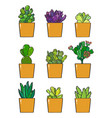 a collection nine succulent plants vector image vector image