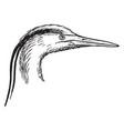 heron head and leg vintage vector image vector image