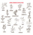 best herbal remedies for hay fever vector image vector image