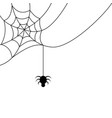 spider hanging from a cobweb vector image