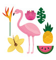 tropical flamengo hibiscus pineapple watermelon vector image vector image