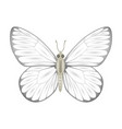white butterfly isolated o vector image vector image
