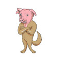 pig dog standing arms crossed cartoon vector image vector image