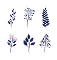 set exotic branches leaves plants vector image vector image