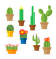 set of cactus in a pot domestic plant with vector image