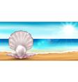 Shell beach vector image vector image