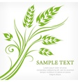Stylized ears of wheat in vector image vector image