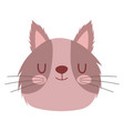 pet little cute brown cat head cartoon isolated vector image vector image