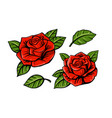 red rose set on white background with leaf vector image