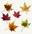 set maple leaves for design vector image vector image