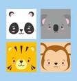 cuta faces animals vector image vector image