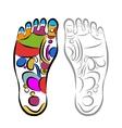Foot massage reflexology sketch for your design vector image