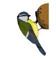 Sketch tit bird vector image vector image