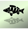 Fish icon set Perch European perch redfin perch vector image vector image