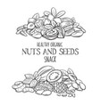 hand drawn nuts and seeds vector image vector image