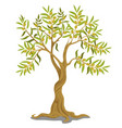 harvesting greek olive tree with ripe green vector image