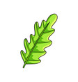 realistic exotic green jungle leaf isolated on vector image