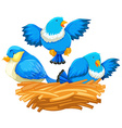 Three blue birds in the nest vector image vector image