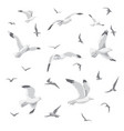 flying seagulls isolated vector image