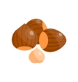 Pile of nuts hazelnut vector image