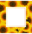 orange yellow sunflower banner card vector image