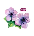watercolor elegant flower japanese sakura vector image vector image