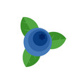 blueberry icon flat style vector image vector image
