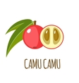 Camu camu icon in flat style on white background vector image