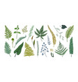 fern leaves hand drawn sketch of forest foliage vector image vector image