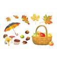 set of autumn objects mushrooms umbrella wicker vector image