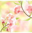 spring background with cherry blossoms vector image