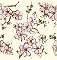 springtime wallpaper with apricot blossom vector image vector image