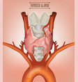 Thyroid gland image vector image
