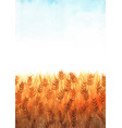 wheat field watercolor with clear sky watercolor vector image