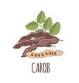 Carob icon in flat style on white background vector image vector image