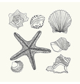 set with hand drawn sea shell isolated on w vector image vector image