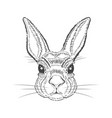 vintage graphic rabbit print vector image