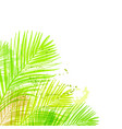 background summer green card leaves palm vector image