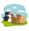 cute cats pets in landscape characters vector image