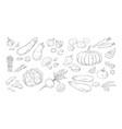hand drawn vegetables vintage sketch of organic vector image
