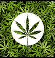 icon sign on cannabis marijuana background vector image