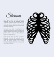 sternum bones poster and text vector image vector image