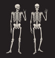 human skeletons posing isolated over black vector image