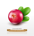 isolated cranberries on a white background vector image vector image